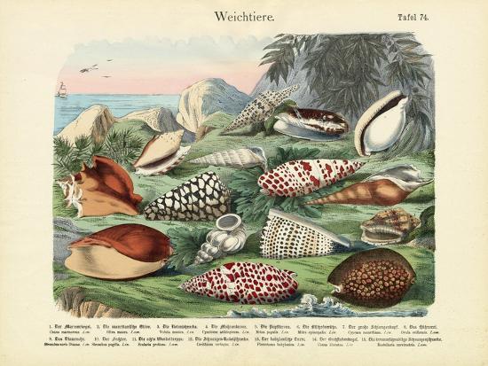 Molluscs, C.1860--Giclee Print