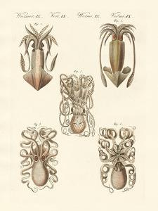 Molluscs or Soft Worms