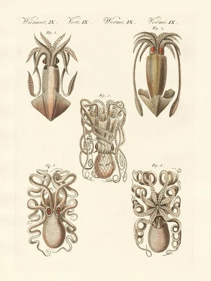 Molluscs or Soft Worms--Giclee Print