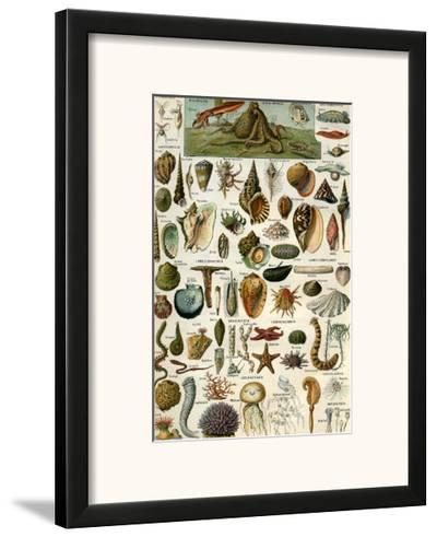 Mollusques--Framed Art Print