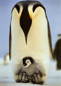 Moms Care