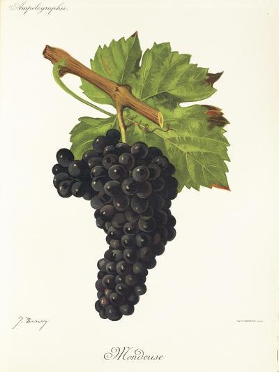 Mondeuse Grape-J. Troncy-Giclee Print