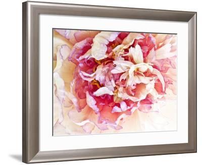 Monet's Peony II-Rachel Perry-Framed Photographic Print