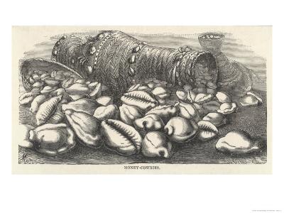Money-Cowries-J.g. Wood's-Giclee Print