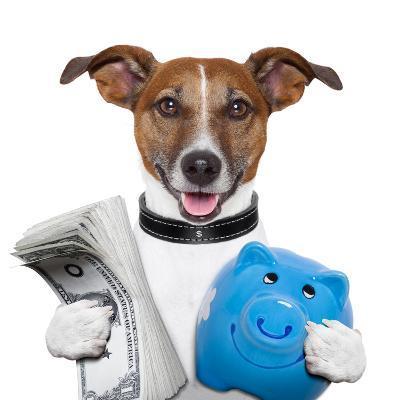 Money Dog-Javier Brosch-Photographic Print
