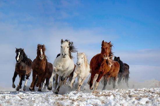 Mongolia Horses-Libby Zhang-Photographic Print