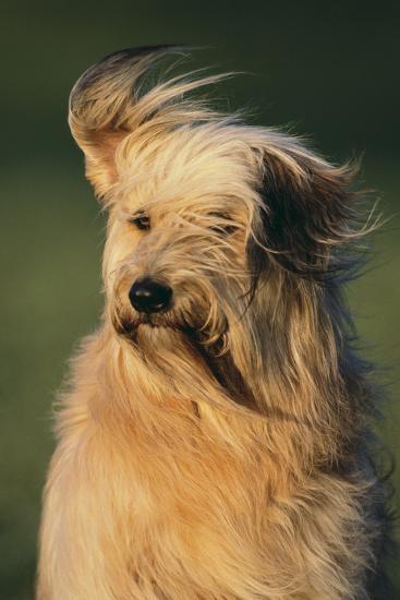 Mongrel Dog-DLILLC-Photographic Print