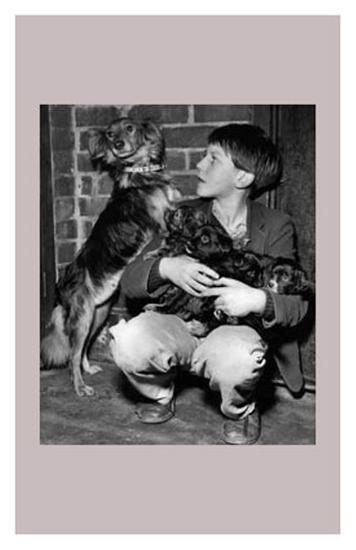 Mongrel Judy Showing Off Her Puppies--Art Print