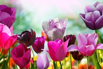 Beautiful Spring Flowers by Monia