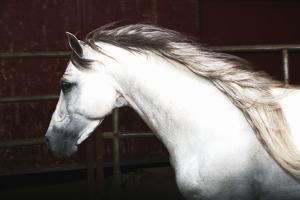 White Horse Running by Monica Rodriguez