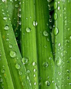 April Rain I by Monika Burkhart