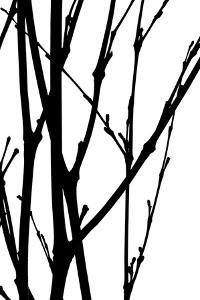 Branch Silhouette III by Monika Burkhart