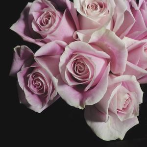 Moonlight & Roses I by Monika Burkhart