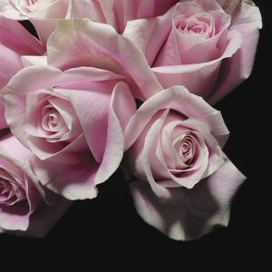 Moonlight & Roses II by Monika Burkhart