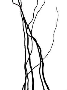 Nature's Dance VIII by Monika Burkhart