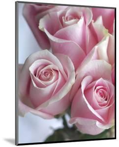Perfectly Pink I by Monika Burkhart