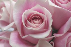 Perfectly Pink III by Monika Burkhart
