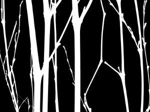 Reverse Silhouette I by Monika Burkhart