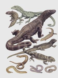 Monitor Lizards and Snakes