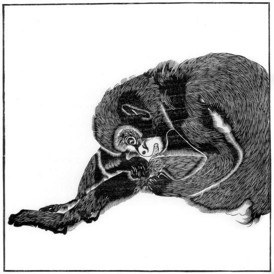 Monkey, 1766--Giclee Print