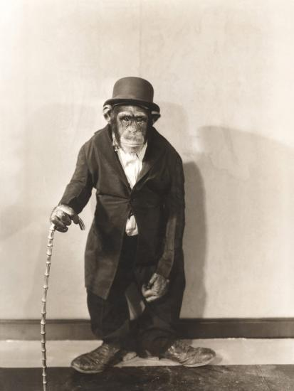 Monkey Dressed in Tight Overcoat and Bowler Hat-Everett Collection-Photographic Print
