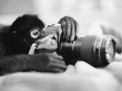 Monkey Holding Camera-Henry Horenstein-Photographic Print