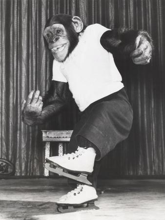 Monkey on Ice Skates-Everett Collection-Photographic Print