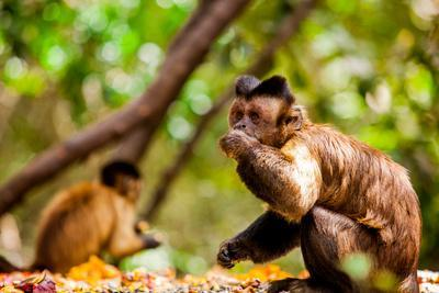 https://imgc.artprintimages.com/img/print/monkey-reserve-johannesburg-south-africa-africa_u-l-q12qr490.jpg?p=0