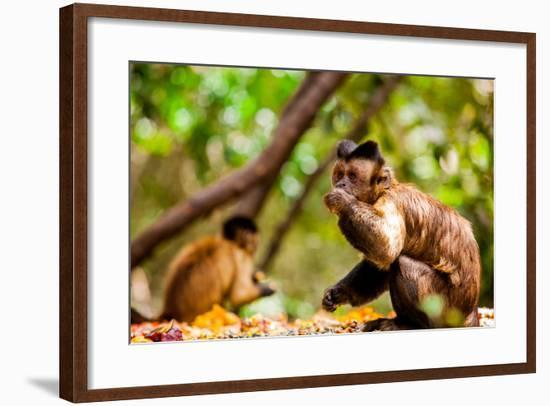 Monkey Reserve, Johannesburg, South Africa, Africa-Laura Grier-Framed Photographic Print