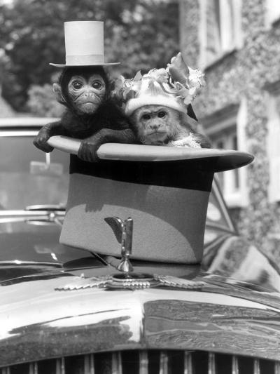Monkey's at Kilverstone Wildlife Park 1983-Arthur Sidey-Photographic Print