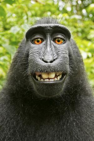Monkey Selfie-David Slater-Photographic Print