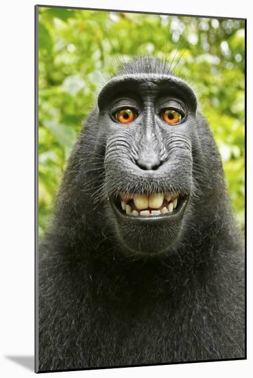 Monkey Selfie-David Slater-Mounted Photographic Print
