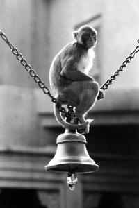 Monkey Sitting on a Durga Temple Bell, Varanasi, Uttar Pradesh, India, 1982