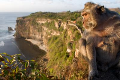 Monkeys Along the Cliffs Next to the Ulu Watu Temple Pura Luhur, Bali--Photographic Print