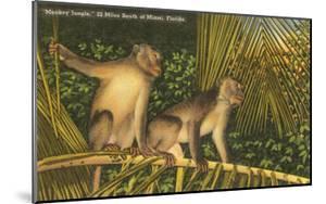 Monkeys, Florida
