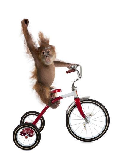 Monkeys Riding Bikes #2-J Hovenstine Studios-Giclee Print