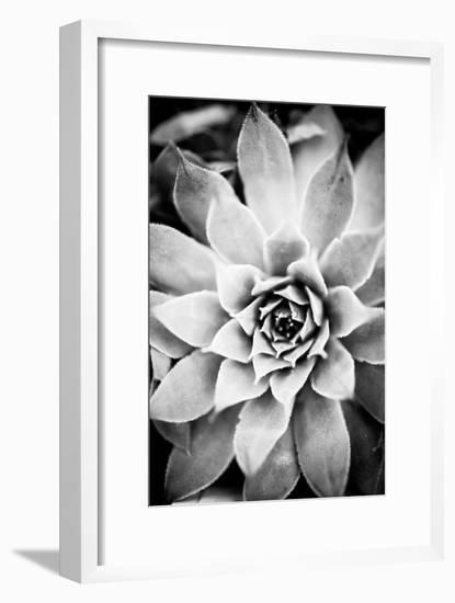 Monochrome Succulent I-Erin Berzel-Framed Photographic Print
