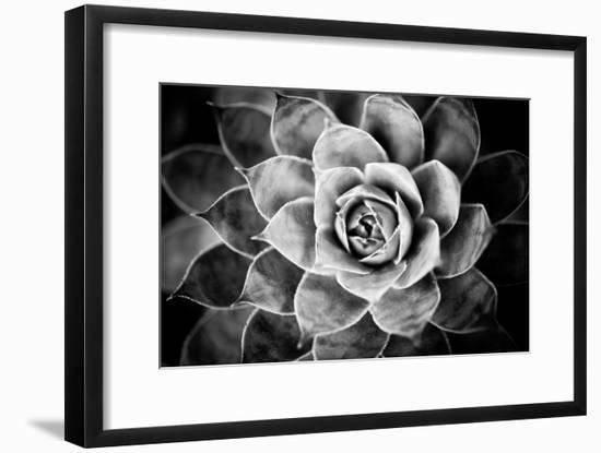 Monochrome Succulent V-Erin Berzel-Framed Photographic Print