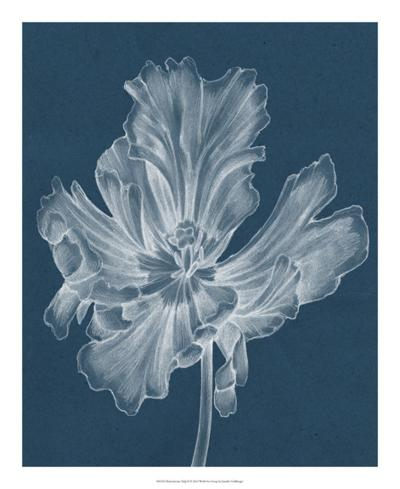 Monochrome Tulip II-Jennifer Goldberger-Giclee Print