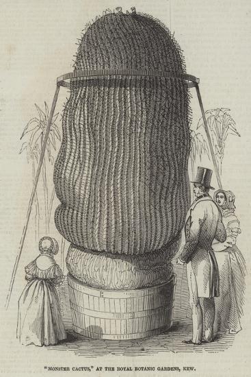 Monster Cactus, at the Royal Botanic Gardens, Kew--Giclee Print
