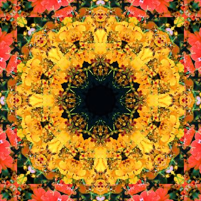 Montage of Flower Photographies, Orchids in a Symmetrical Ornament, Mandala-Alaya Gadeh-Photographic Print