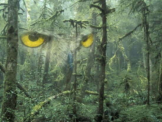 Montage, Owl, Forest, Oregon, USA-Nancy Rotenberg-Photographic Print