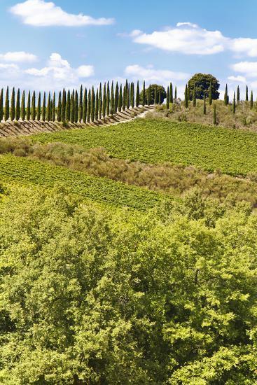 Montalcino-lachris77-Photographic Print