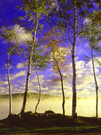 Birch Trees & Mist, Negaunee, Michigan '90 by Monte Nagler