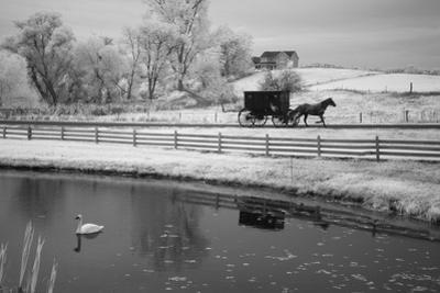 Buggy & Pond, Shipshewana, Indiana '13