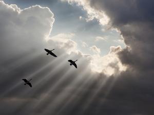 Flying on Sunbeams, Macinaw Island, Michigan '10 by Monte Nagler