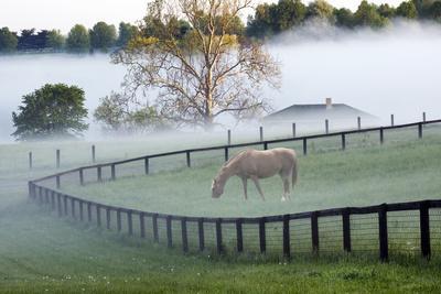 Horses in the Mist #3, Kentucky '08