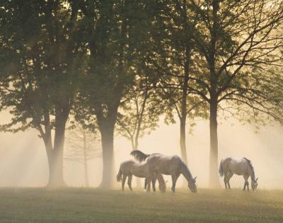 Horses in the Mist by Monte Nagler