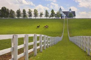 Manchester Farm, Kentucky 08 by Monte Nagler