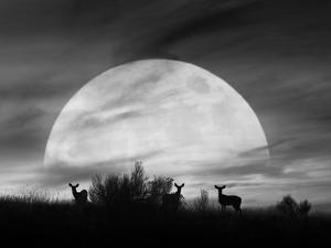 Moonlight Silhouette, Farmington Hills, Michigan '12 by Monte Nagler